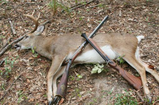 B deer 1